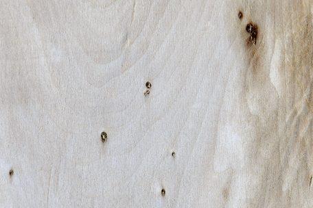 Stock Timber 5 Lime